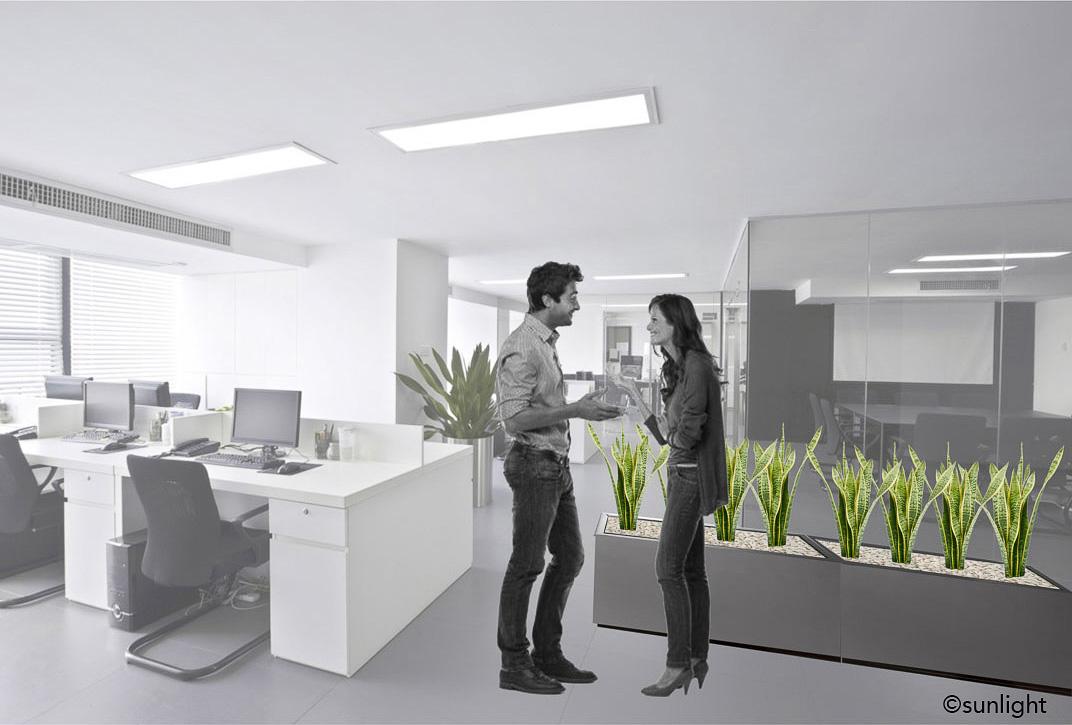 OficinasImplata©sunlight